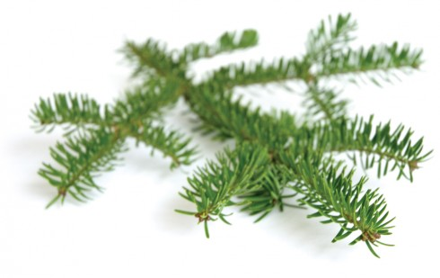 lyme-disease-gift-guide-at-christmas